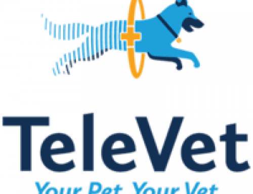 Vet Care from Home